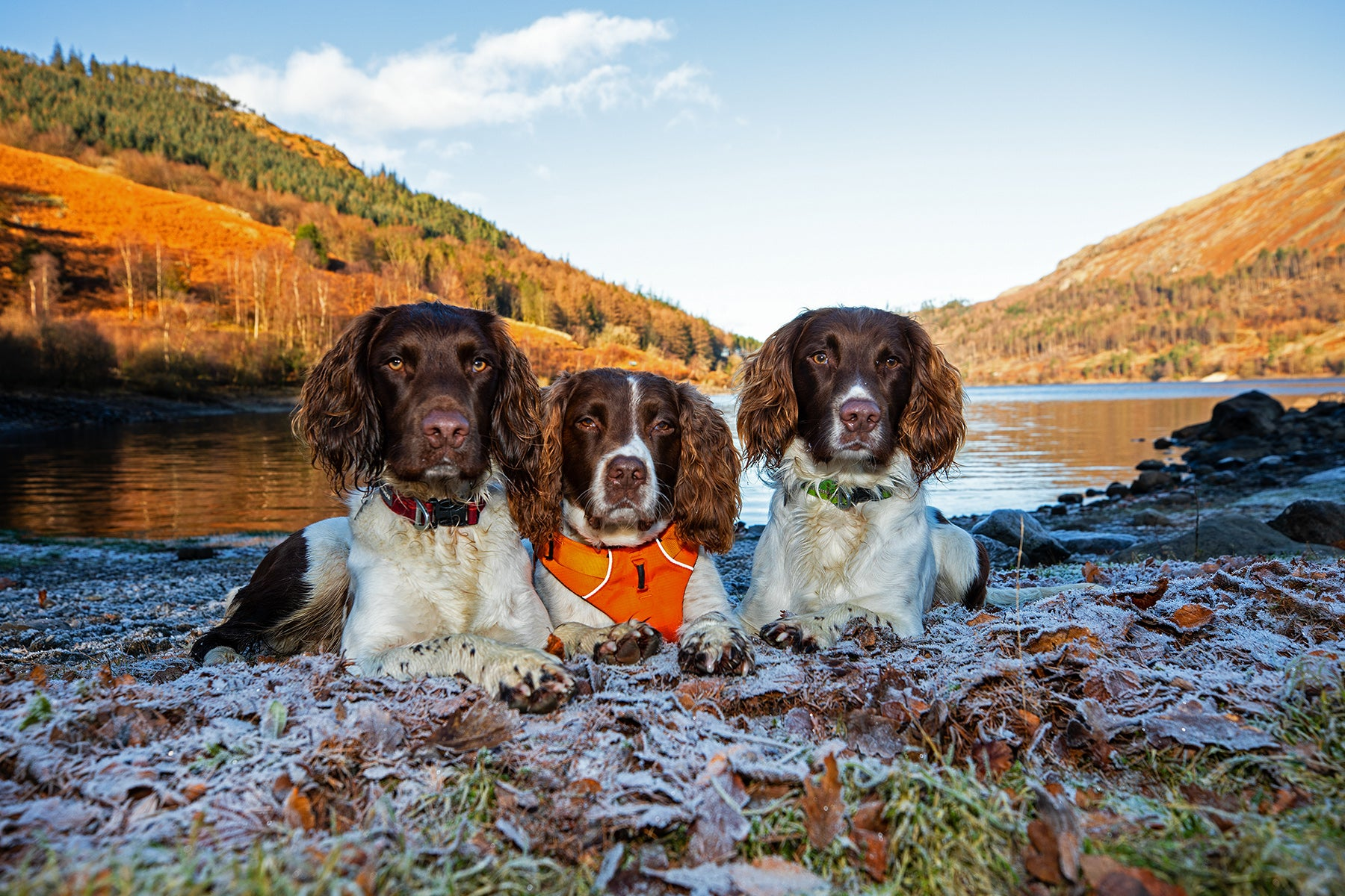 Kerry's three dogs stare into the camera laying side by side next to a lake.