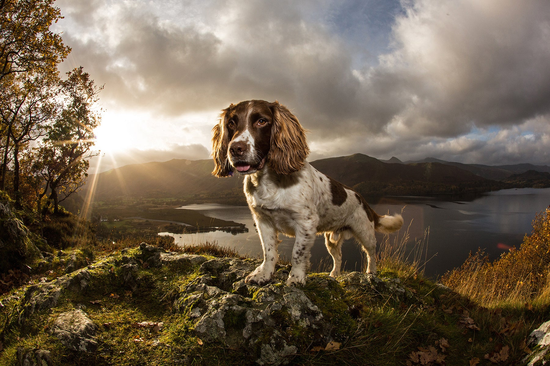 Dog max stands atop a rock up in the hills above a lake.