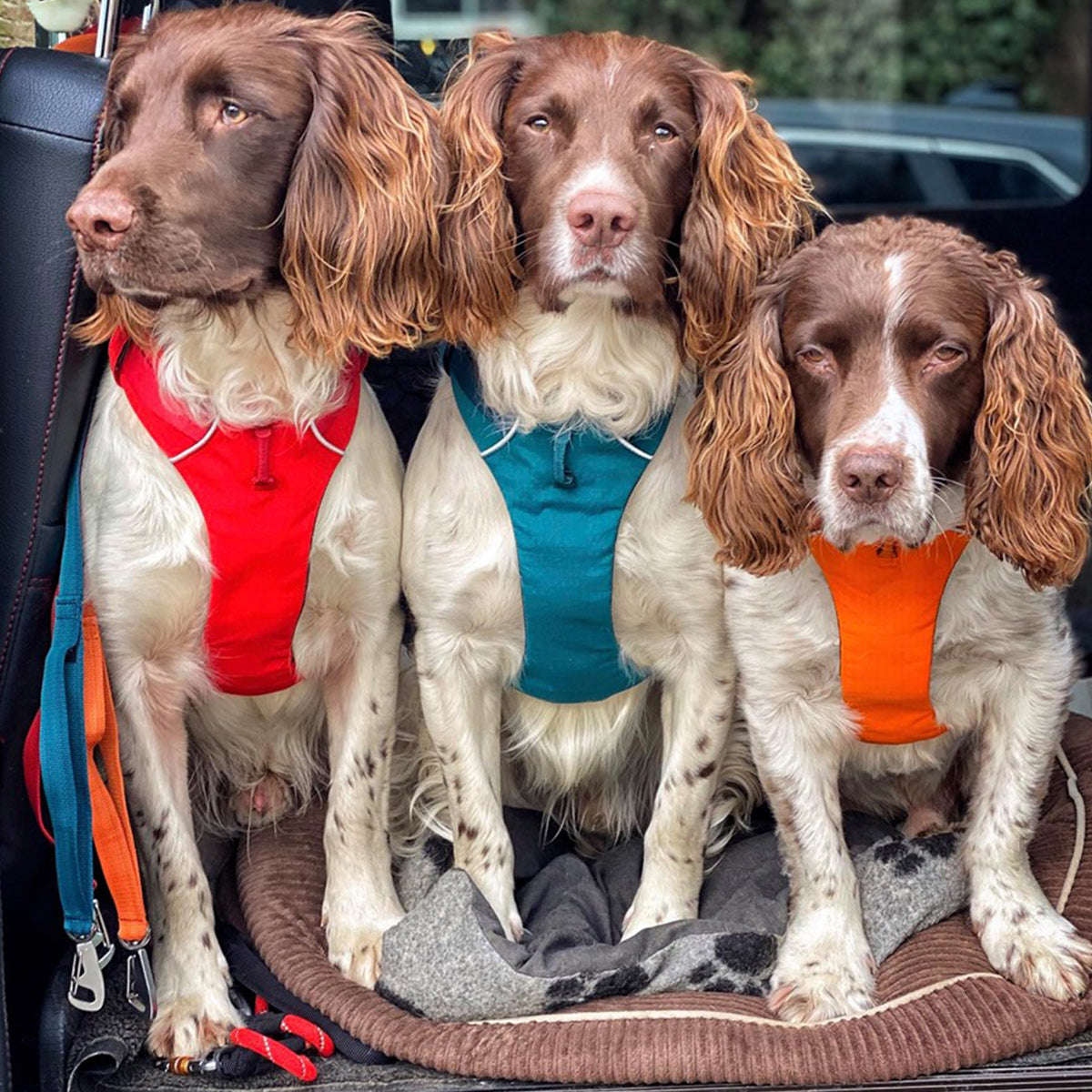Kerry's three dogs in the back of the car.