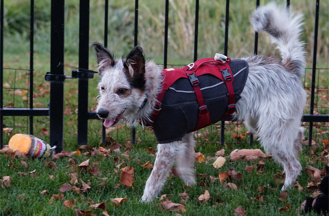 Juno in cloud chaser jacket with flagline harness over playing outside.
