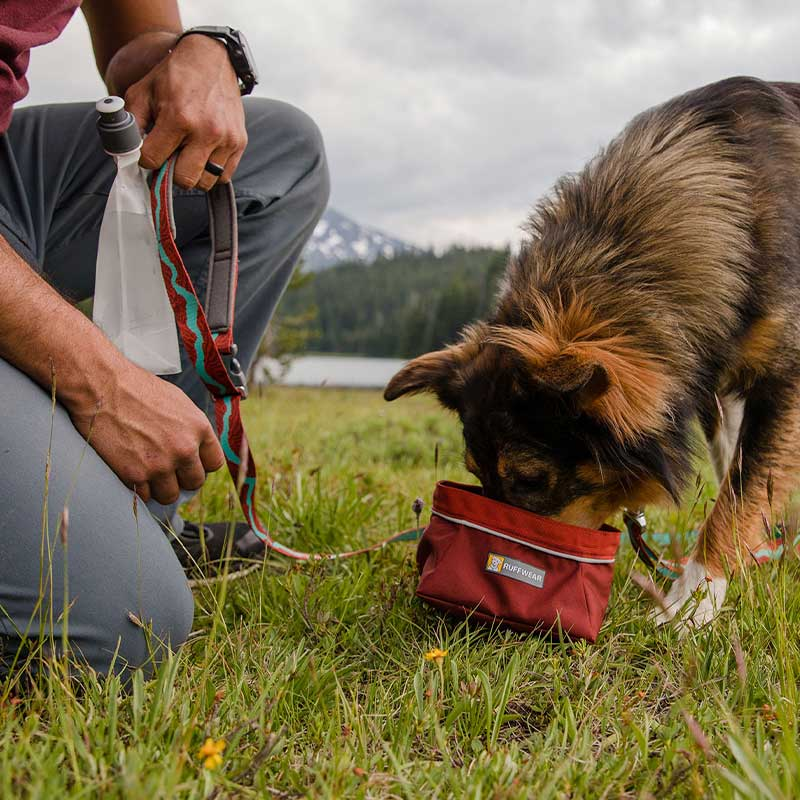 Dog drinking out of red packable dog bowl