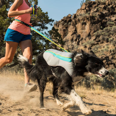 Cooling Gear For Dogs