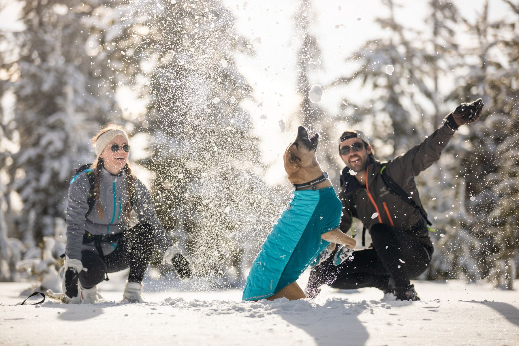 Dog in powder hound jumps for snowballs thrown by it's humans.
