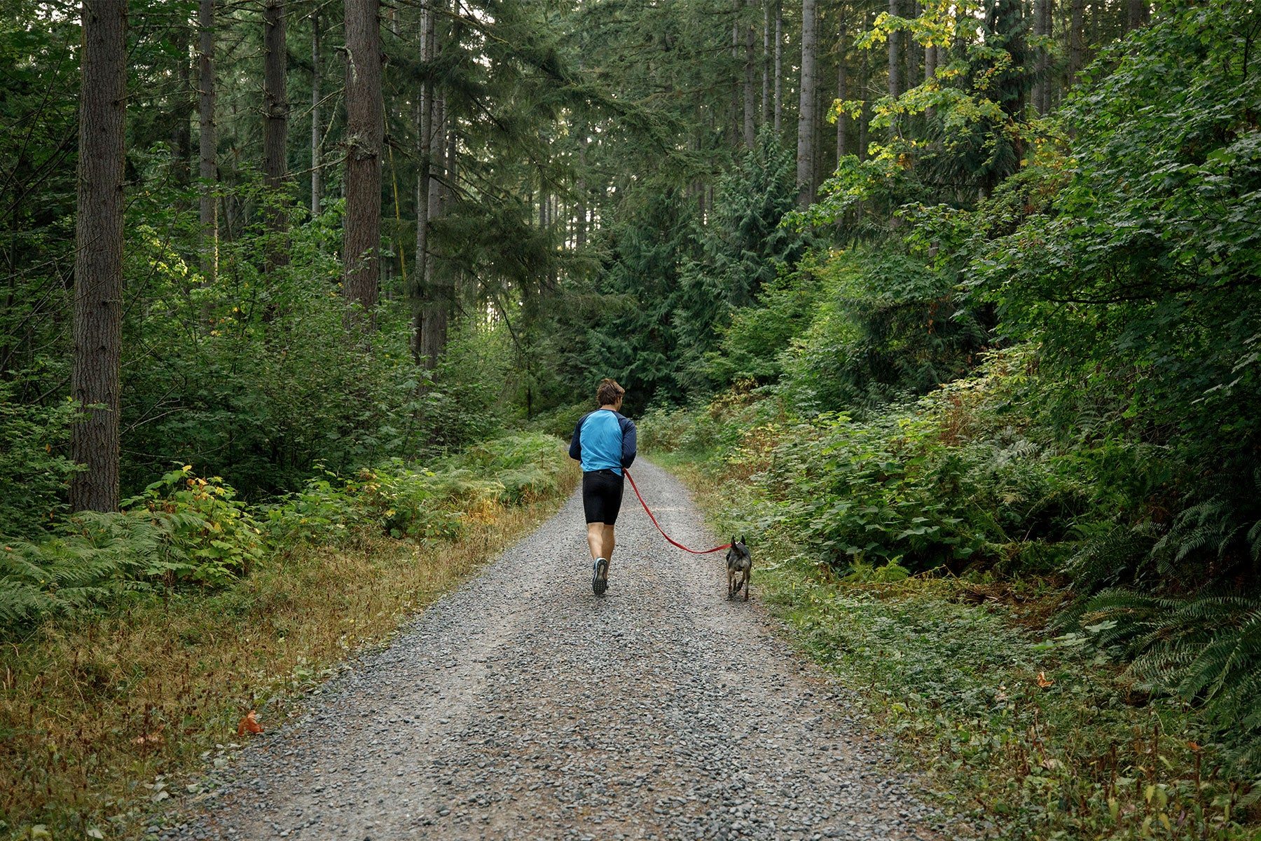 Human and dog go for a run.