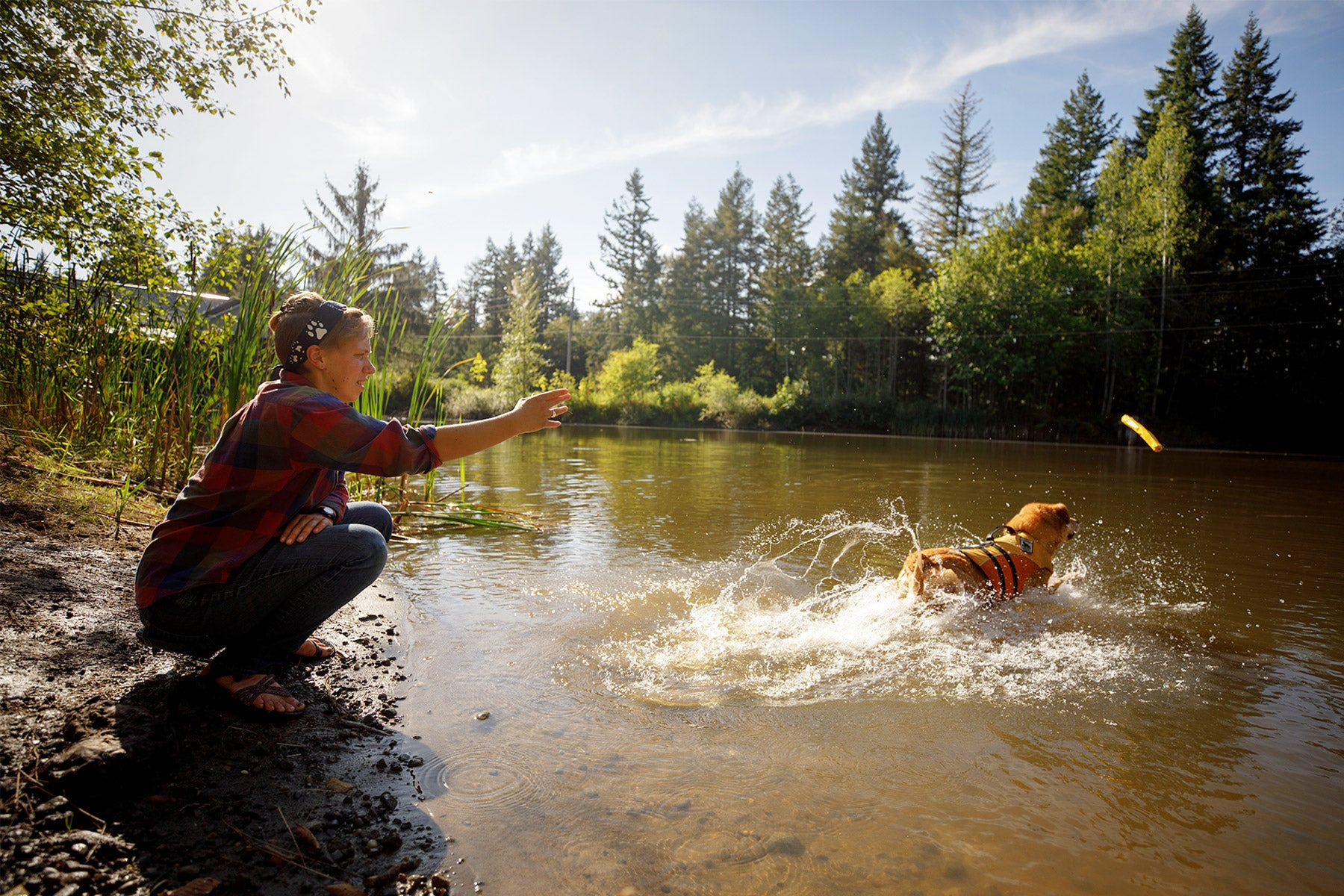 Dog in float coat jumps into the river to catch the gnawt-a-stick