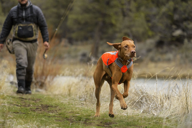 dog in reflective jacket running on hiking trail with owner behind him