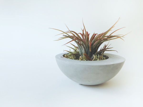 Concrete Planter with plant