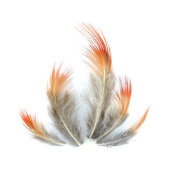 20 Plumes de faisan marron orange naturelle 7 à 8cm