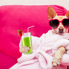 Pampered Pup