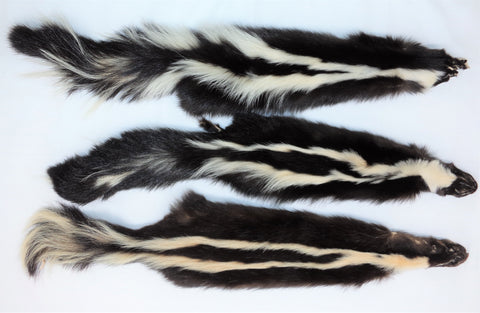 Skunks -3XL-2X, Select Grade