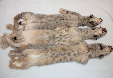 Canadian Lynx XL - High Grade