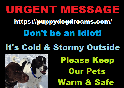 Don't be an idiot!  It's Cold Outside - Keep our Pets Warm and Safe