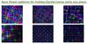 SL-37 - RGB Moving 18 Pattern Laser Christmas Light -2nd GEN - Spectrum Laser Lights