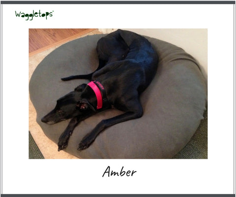 Amber, a black retired racing Greyhound with a red collar, asleep on a sage green Waggletop fleece dog bed cover.