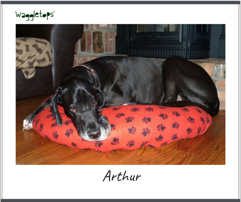 Arthur the black Great Dane on a red Waggletop with black pawprints.