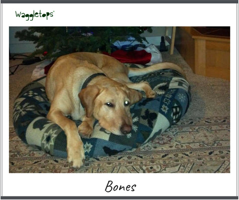 Bones, a big yellow labrador dog, asleep on a Northwest cabin printed fleece Waggletops - with gray and slate blue patches of moose, cabins and trees.