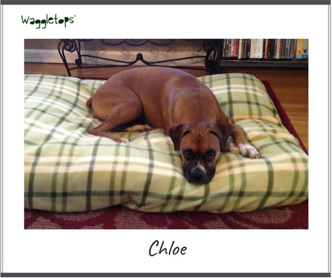 Chloe, a brown bulldog, asleep on a green and tan plaid fleece Waggletop dog bed fitted sheet.