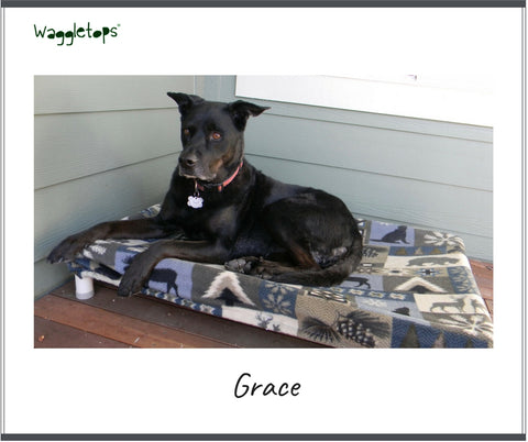 Grace, a black dog, on the front porch, sitting on her platform bed with a Waggletop.