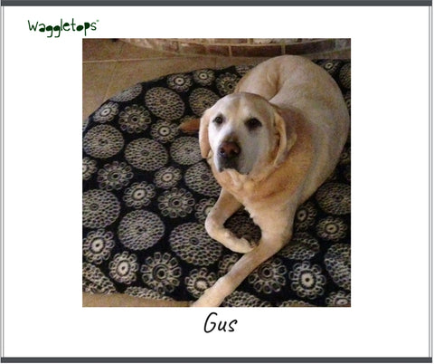 Gus, a yellow lab on a black and white flowered Waggletop.