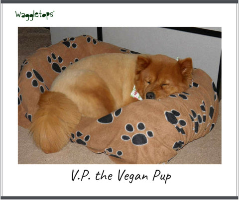 V.P., a red-blonde fluffy chow dog asleep on a Gracie Girl Waggletops dog bed cover in his bolster bed.