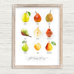 Orchards Collection - 8x10 Pear Print