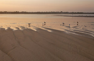 Beach Gulls, by Michael Williams