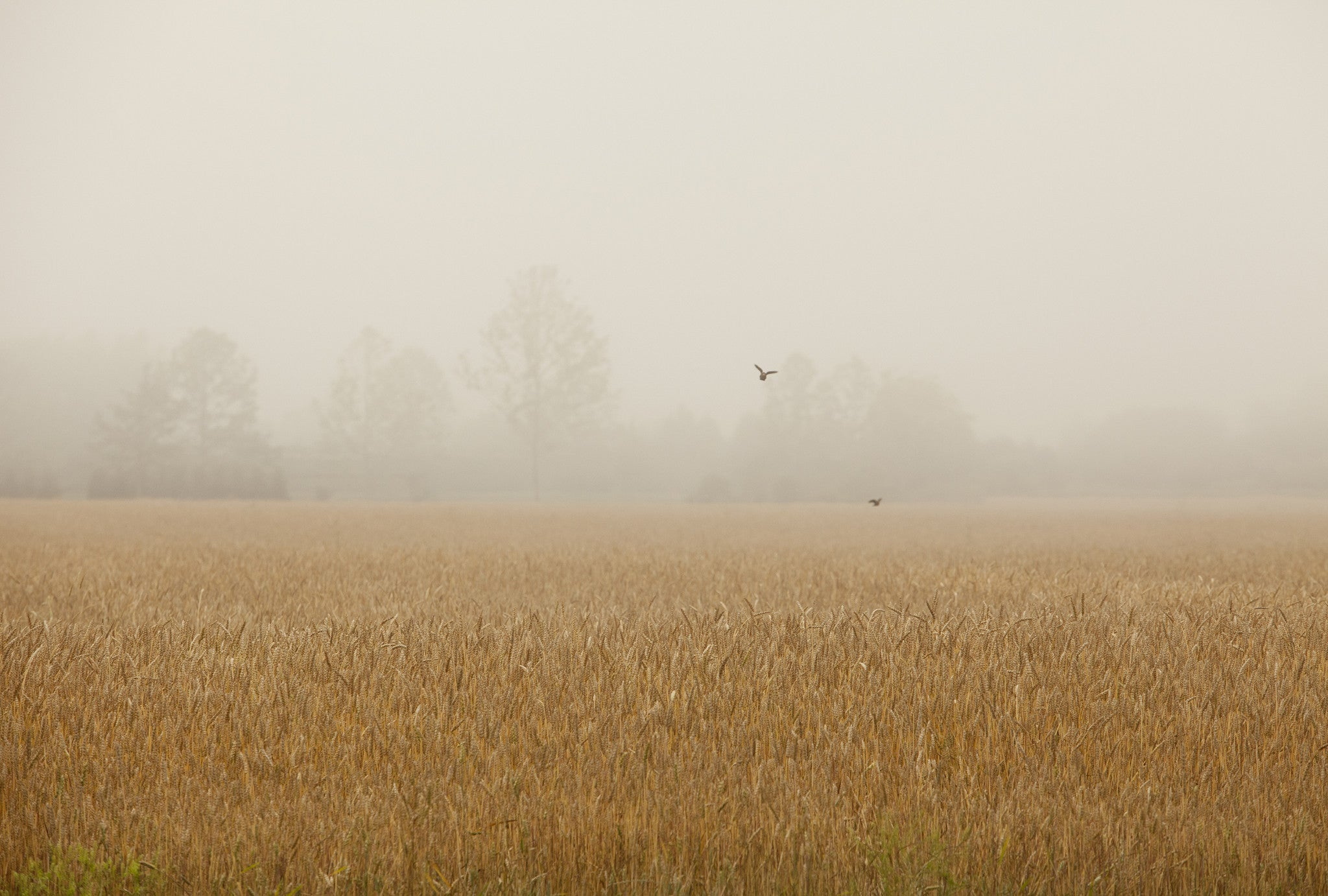 Foggy Fields, by Michael Williams