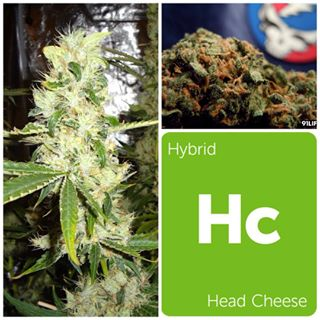 Head Cheese - 1g