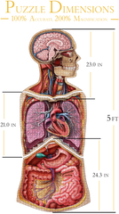 Bundle - Anatomy Jigsaw Puzzle