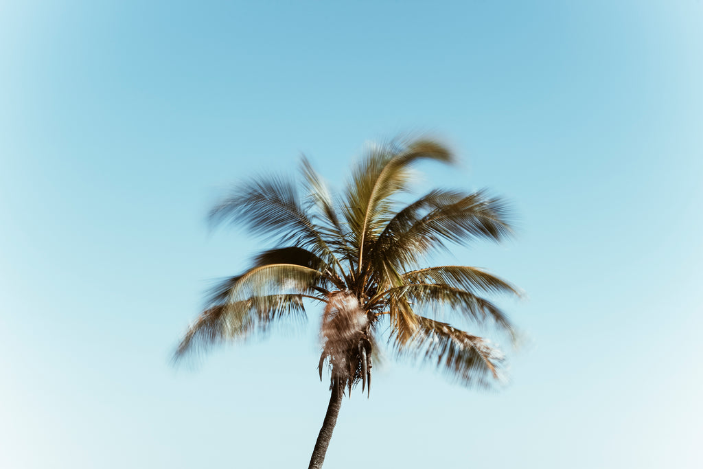 windy, palmy, mooloolaba, beautiful, photo, print, prints, photography, design, interior, framing, styling, phresh