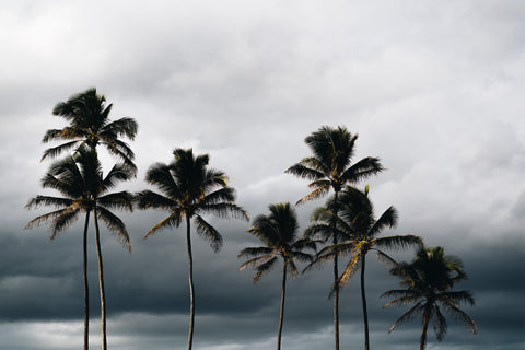 Hawaii, Palmys, palm trees, moody, beautiful, photo, print, prints photography, design, interior, framing, styling, phresh