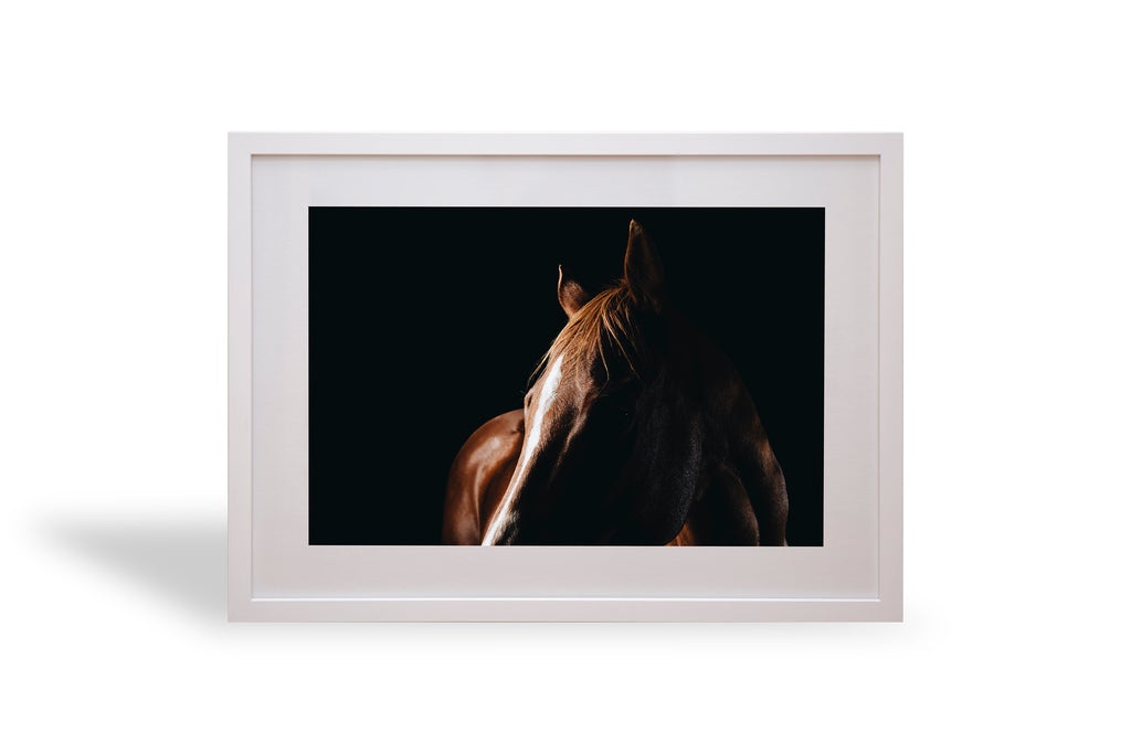Horse, studio, lighting, beautiful, photo, print, prints, somersby, photography, design, interior, framing, styling, phresh