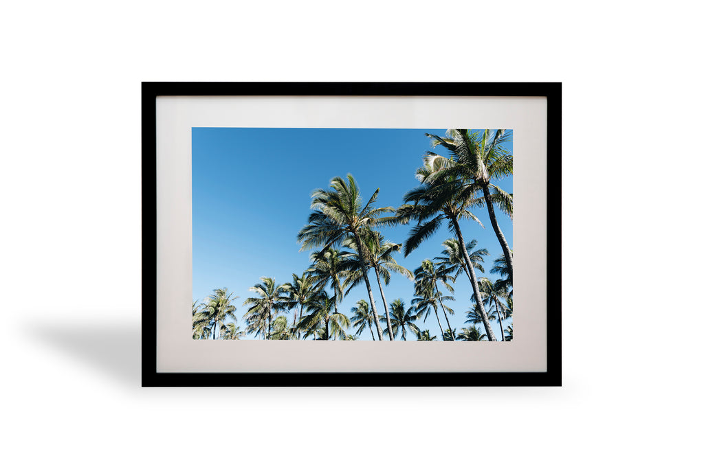 Crowded, palmys, palm tree, turtle bay, hawaii, oahu beautiful, photo, print, prints, ocean, water, beach, coast, coastal, photography, design, interior, framing, styling, phresh