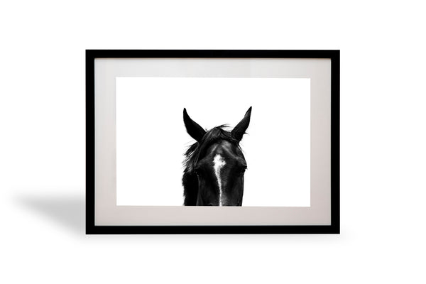 beautiful, photo, print, prints, horse, photography, design, interior, framing, styling, phresh