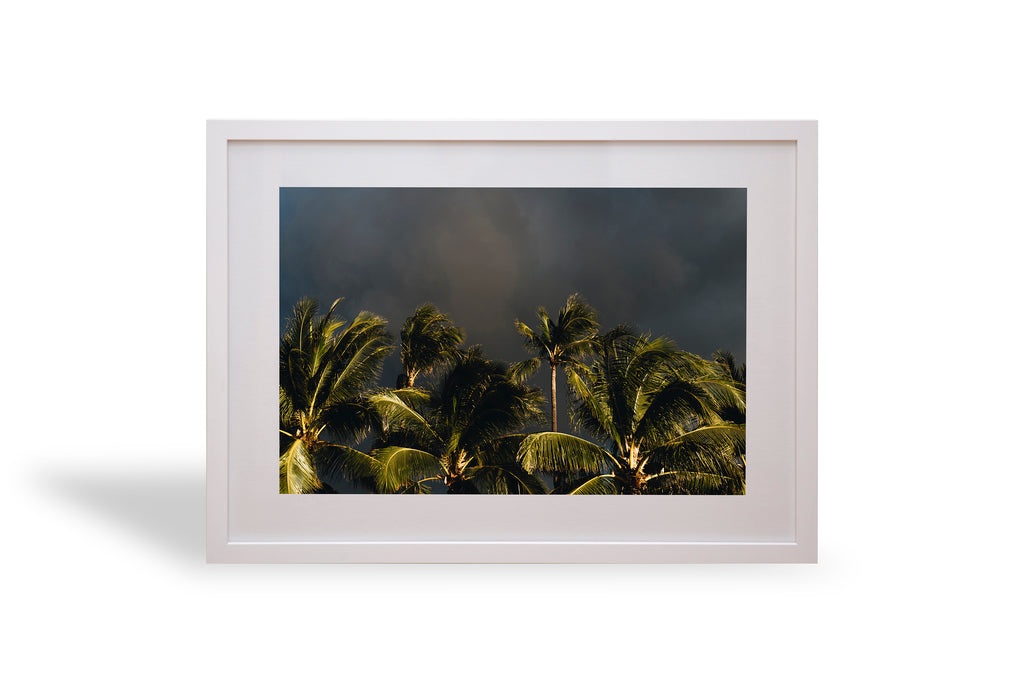Tropical storm, Honolulu, Hawaii, palmy, palm trees, interior, framing, styling, phresh