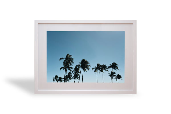 Hawaii, palmy, various, palm tree, interior, framing, styling, phresh