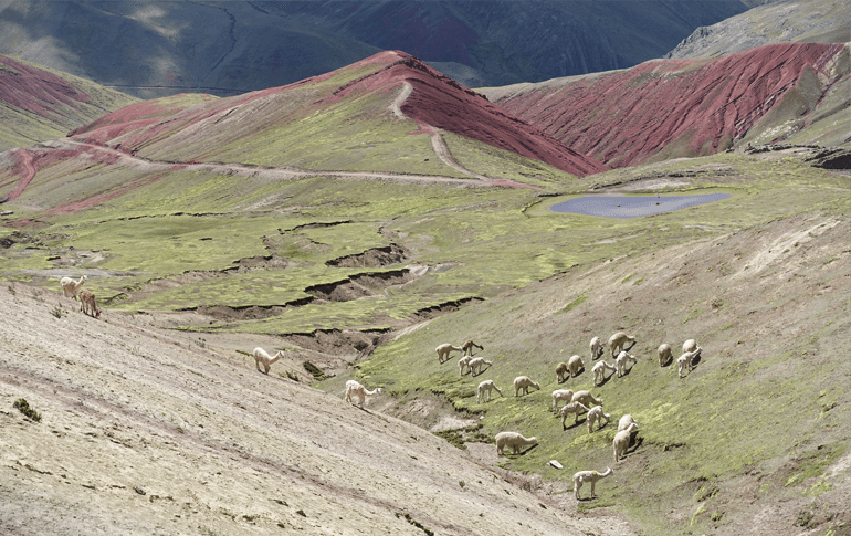 Alternative Rainbow Mountain Tour in Cusco with Llamas and Alpacas