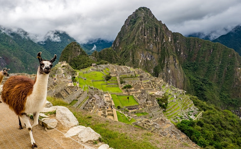 Machu Picchu with Llama in front at it