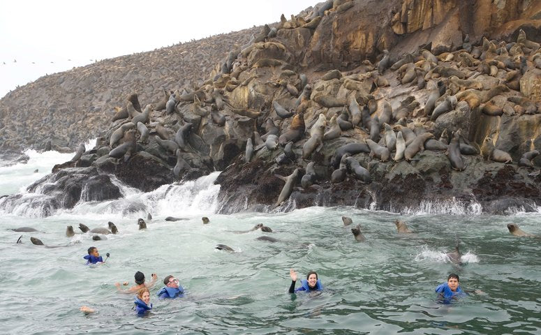 People swimming with sea lions in front of Palomino islands