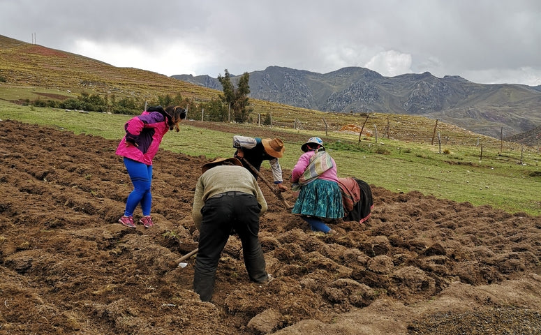 working on the field close to the palccoyo