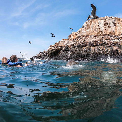 People swimming with sea lions