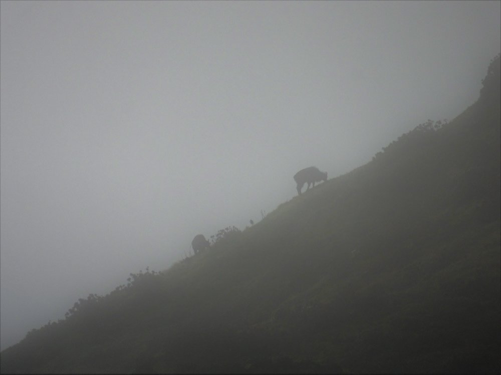 tahr in the cloud
