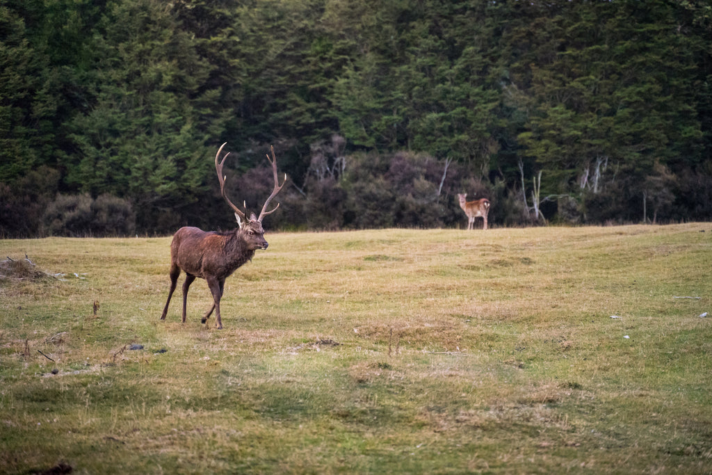 sika stag luke care