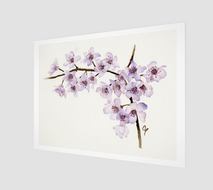 Cherry Blossoms Art Prints