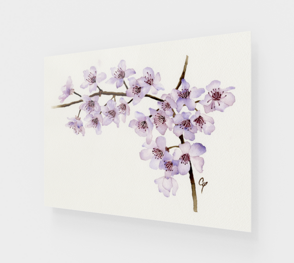 Cherry Blossoms Acrylic Prints