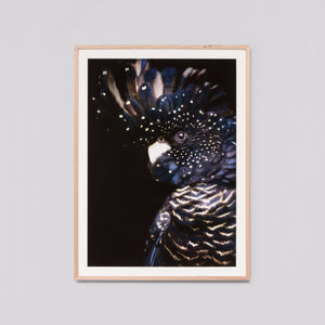 Midnight Cockatoo 85 x 114cm - PRE ORDER