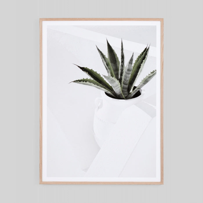 Summer Agave 85 x 114cm - PRE ORDER