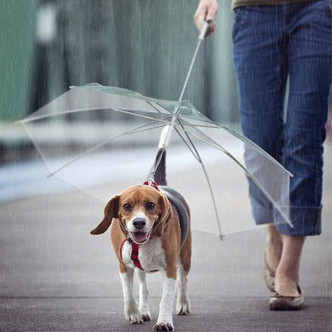 ☂️The DogBrella