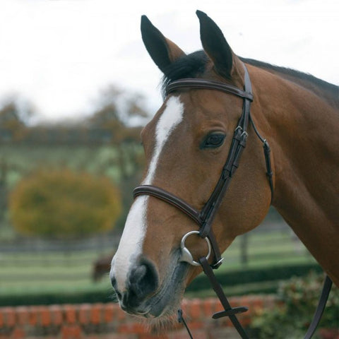 Mark Todd plain raised padded bridle with cavesson noseband