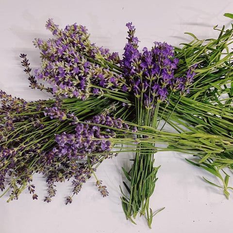Lavender from Amberwing Apothecary's instagram